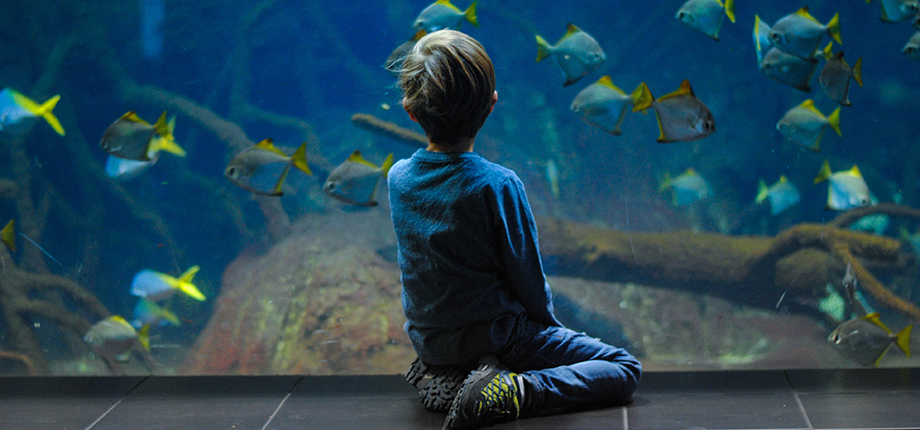 A young boy sits in front of a large aquarium watching the fish